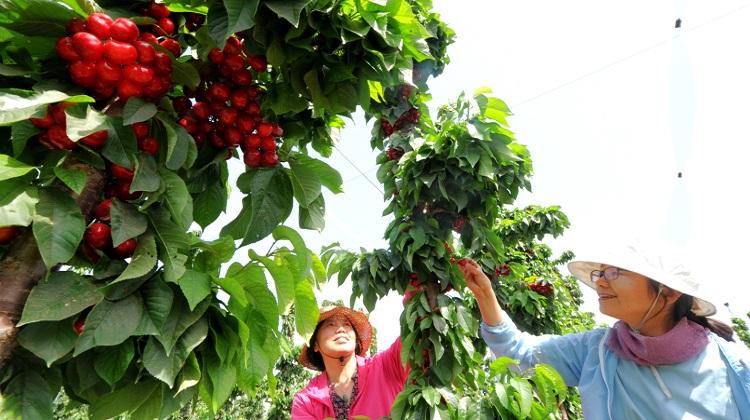 【扶贫印记】河北顺平:太行山里的农业创新驿站