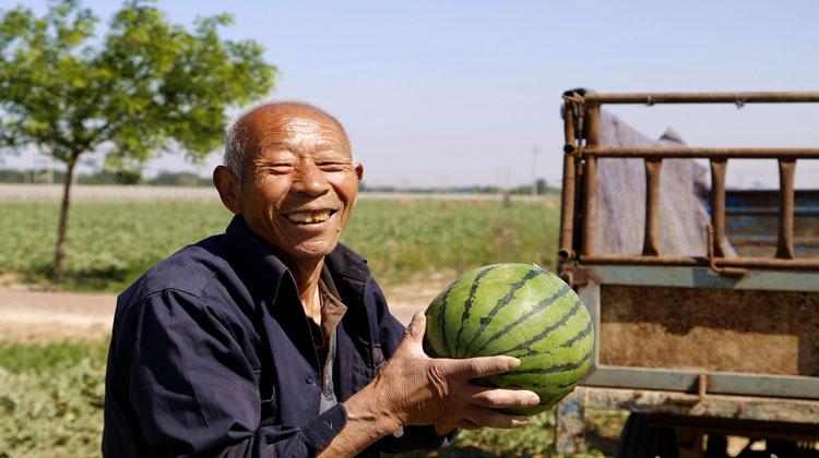 """【扶贫印记】阜城前八丈村:小西瓜""""变身""""脱贫大产业"""